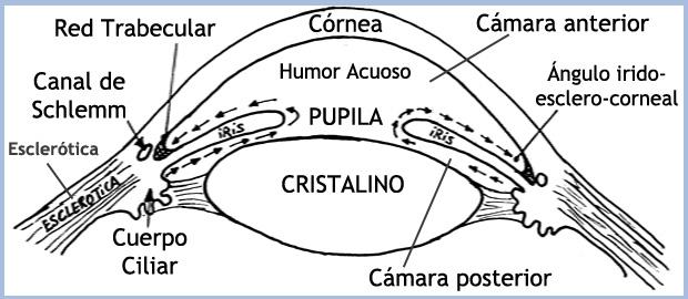 glaucoma, lanuevamedicina, medcuantica, Angel Baña, vision, cerebro ...